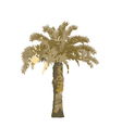 the palm tree vector image vector image