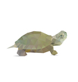 Turtle isolated vector image vector image