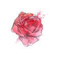 beautiful red rose hand drawn vector image vector image