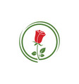 beauty rose flower icon vector image vector image
