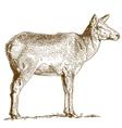 etching deer vector image