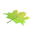 green maple leaf icon isometric style vector image