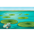 lily pads vector image