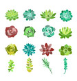 set green succulent and vector image