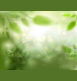 natural defocus background with plants trees vector image vector image