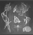 set animals on chalkboard background colibri vector image vector image