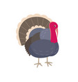 turkey flat isolated on white vector image vector image