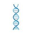 dna molecules structure or spiral chromosome vector image vector image
