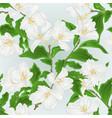 Seamless texture flower jasmine branch