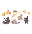 collection of funny cats of various breeds lying vector image