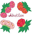 cute abutilon set colorful flowers collection vector image vector image