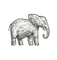 elephant sketch animal hand drawn vintage vector image