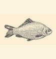 fish hand drawn sketch vintage vector image