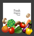 Fresh vegetables and banner vector image vector image