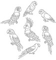 funny exotic parrots vector image
