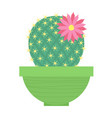 green cacti with flower in green flowerpot vector image vector image