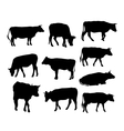 cow set black silhouette on white background vector image
