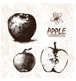 digital detailed apple hand drawn vector image vector image