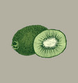 fruit kiwi hand drawn llustration realistic vector image