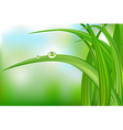 Green Grass And Water Drops vector image