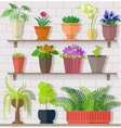 Houseplant Set Design Flat Concept vector image