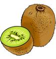 kiwi fruit cartoon vector image vector image