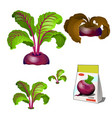 set stages life a agricultural plant vector image