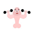 strong penis with dumbbells sport for member vector image