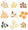 Cereals grains icon set vector image