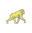 chimpanzee walking side drawing vector image