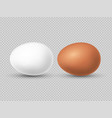 realistic brown and white chicken eggs vector image vector image
