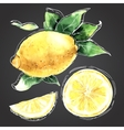 The watercolor drawn set of lemons vector image vector image