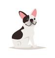 cute french bulldog dog vector image