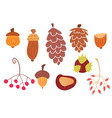 set autumn cones and plants vector image vector image