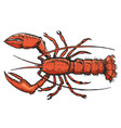 sketch of lobster vector image