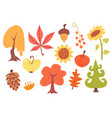 autumn cartoon set plants vector image