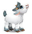 cute little animated goat isolated on a white vector image vector image