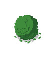 green bush isolated icon vector image vector image