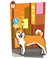 japanese dog on the city street vector image vector image