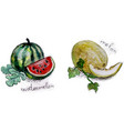 melons in watercolor vector image vector image