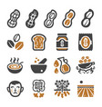 peanut icon set vector image
