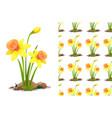 seamless background design with daffodil flowers vector image