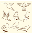 set of differnet sketch bird for design use vector image