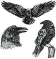 black raven bird sketch icon set vector image vector image