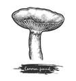 common funnel mushroom sketch fungus vector image vector image