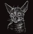 black cat portrait 6 vector image
