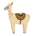 cartoon lama indian a cute vector image vector image