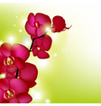 Pink Orchids With Blur vector image
