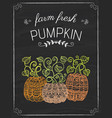 pumkins doodle on the black board vector image vector image