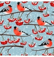Seamless bullfinch and rowan vector image vector image